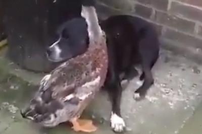 Khi yêu nhau mà không thể đến được với nhau