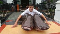 Cặp cá leo khổng lồ hiếm có, nặng hơn 1 tạ