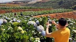 Nhận diện khó khăn, tìm giải pháp cho du lịch canh nông
