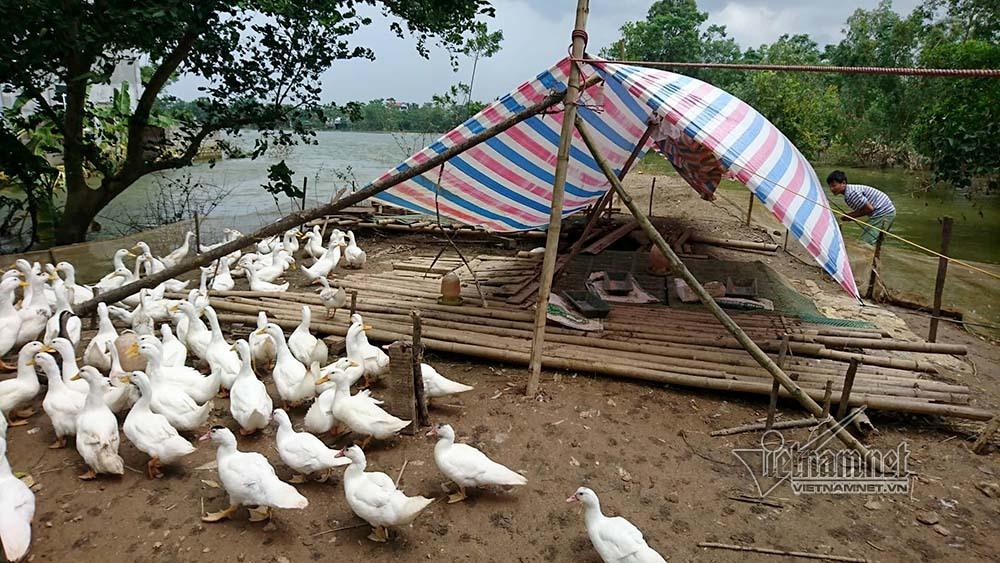 Hà Nội,ngập lụt,ngập lụt ở Chương Mỹ