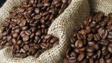 Giá cà phê hôm nay 5/10: Giá cà phê ít biến động