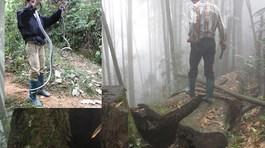 Rùng mình cảnh tay không vồ bắt hổ mang chúa trong rừng sâu Lào Cai