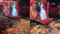 Đàn cá đón thuyền chở cô dâu, chú rể đẹp như cổ tích