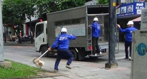 Quận trung tâm Sài Gòn 'ra quân' bắt chó thả rông