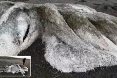 Sinh vật lông lá bí ẩn dạt vào bờ biển Nga