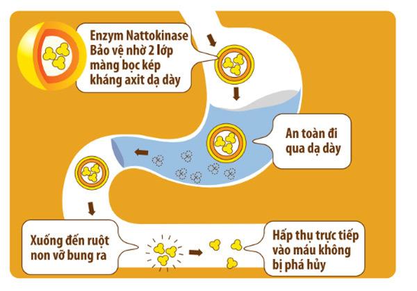 Enzym Nattokinase