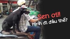 Chú chó ngơ ngác khi bị người đàn ông buộc sau xe máy chở đi