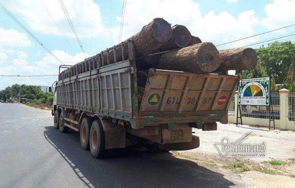 gỗ lậu,bắt kiểm lâm,Phượng râu,Đắk Lắk,Đắk Nông