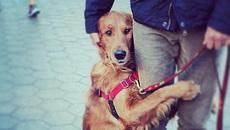 Chú chó ôm lấy chủ nhân sau một thời gian dài ở bệnh viện
