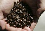 Giá cà phê hôm nay 20/8: Cà phê Arabica chạm mức thấp nhất từ 2013