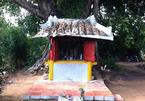 Ly kỳ cây sộp 300 tuổi và ngôi miếu cổ ở Phan Thiết