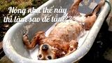 Chú chó thông minh tự xả nước để... tắm