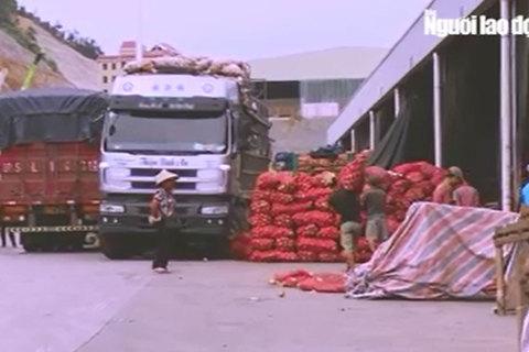 Đường đi nông sản Trung Quốc nhái Đà Lạt