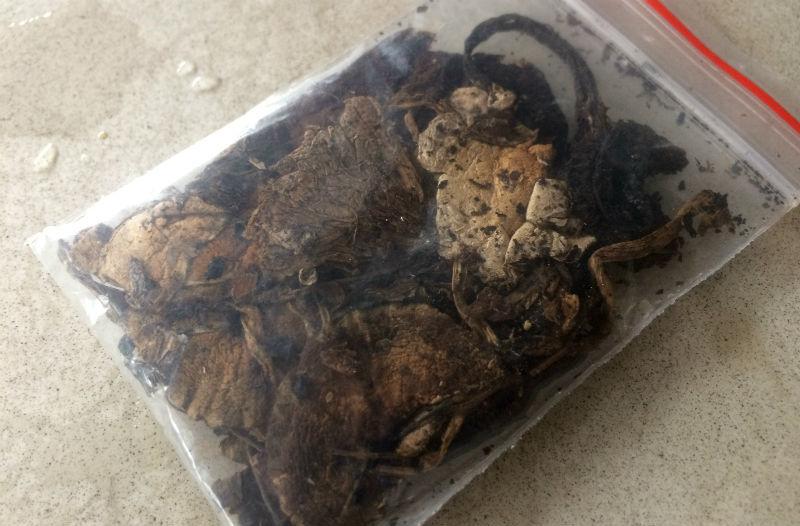Nấm 'ma thuật' đầu độc giới trẻ, mua dễ như rau ở Sài Gòn