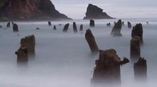 Bí ẩn về 'khu rừng ma' 2000 năm tuổi đột nhiên nổi lên trên mặt biển