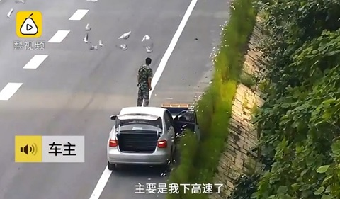 Bị phạt vì phóng sinh bồ câu trên cao tốc