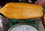 Phát sốt với quả mít hơn 40 kg, mỗi múi nặng 2 lạng