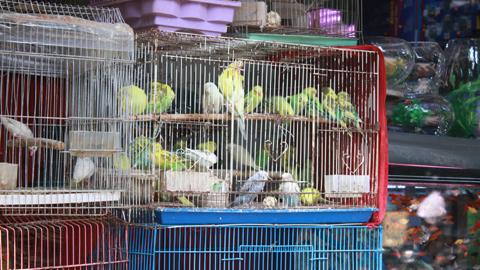 """Phố bán chim phong sinh ở Hà Nội nhộn nhịp trong """"tháng cô hồn"""""""