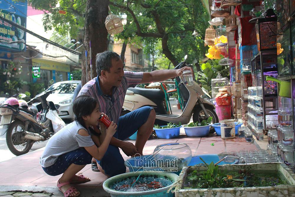 Tiếng kêu tuyệt vọng 'cầu mong phóng sinh' trên góc phố 100 năm Hà Nội