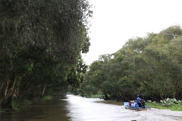 Sao Mai trên thiên đường xanh ngập nước