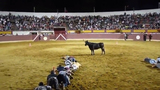 Lập team 'lầy lội' bày trò trêu bò tót gây sốt cộng đồng mạng