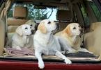 Những lưu ý khi chở thú cưng trên xe