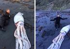 Xem mực khổng lồ dạt vào bờ biển
