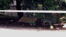 Phát hiện người đàn ông chết bất thường dưới gốc cây