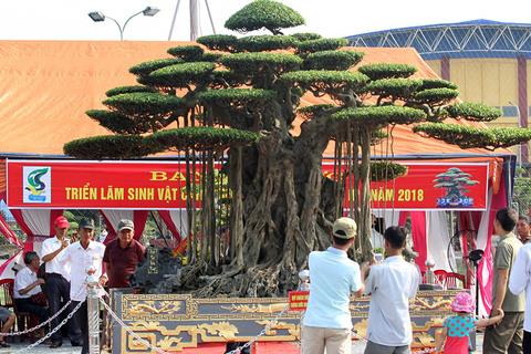 Trải thảm đỏ 'nghênh đón' siêu cây dát vàng 10 tỷ xôn xao cả huyện