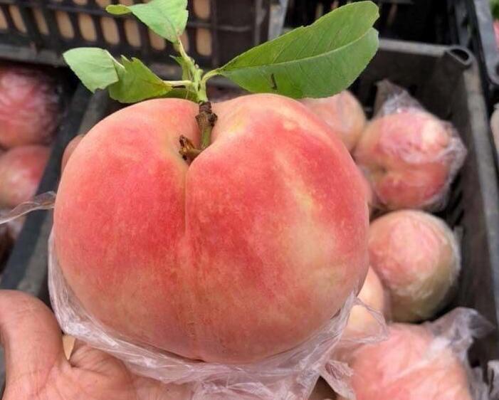 Sự thật đào tiên khổng lồ mới xuất hiện: 1kg/quả, rẻ như rau muống