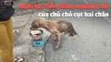Nghị lực sống phi thường của chú chó cụt chân khiến ai cũng phải rơi lệ