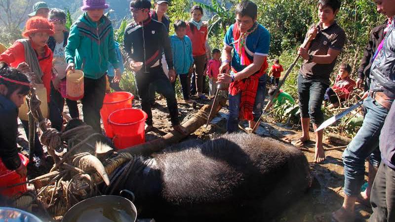 lễ hội đâm trâu,đâm trâu ở Thừa Thiên Huế,lễ hội phản cảm,lạm thu