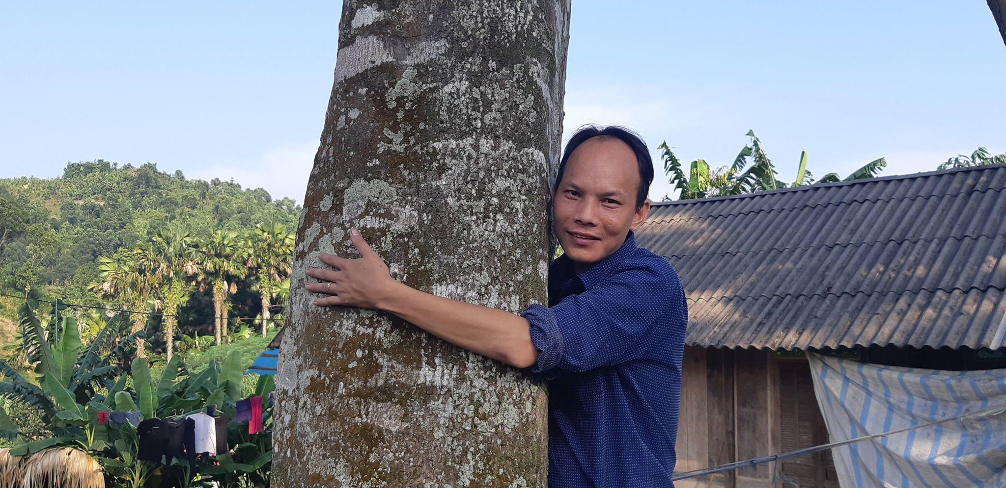 2 'cụ' cây quế vàng khủng ngã giá cả ngàn đô ở thủ phủ quế Văn Yên