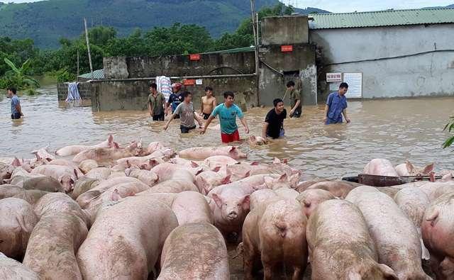 lũ lụt,lũ lụt ở Thanh Hóa,thuỷ điện xả lũ