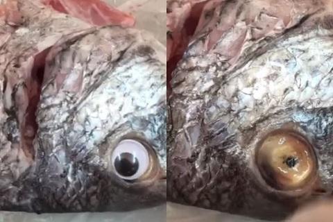 Bắt quả tang lắp mắt giả cho cá để lừa khách hàng