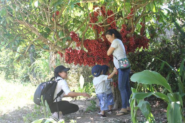 Cận cảnh vườn dâu đỏ 'lạ' trên phố núi