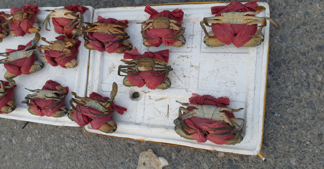 Cua biển siêu rẻ 70.000 đồng/con, dân sợ không dám mua