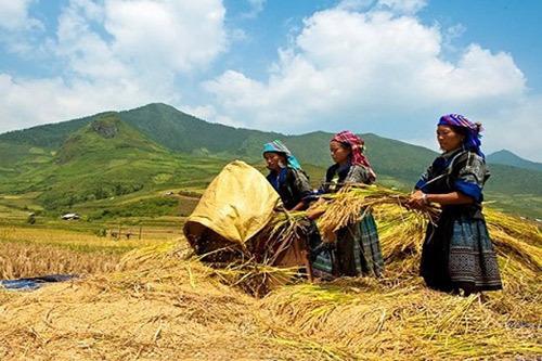 Phát triển hạ tầng hỗ trợ sản xuất cho đồng bào dân tộc