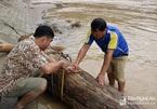Báu vật giữa dòng nước lũ: Anh nông dân trúng vận may trăm năm