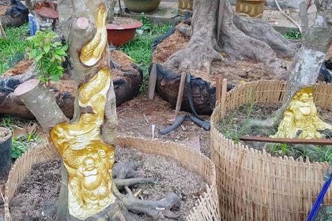 tượng phật khắc trên cây