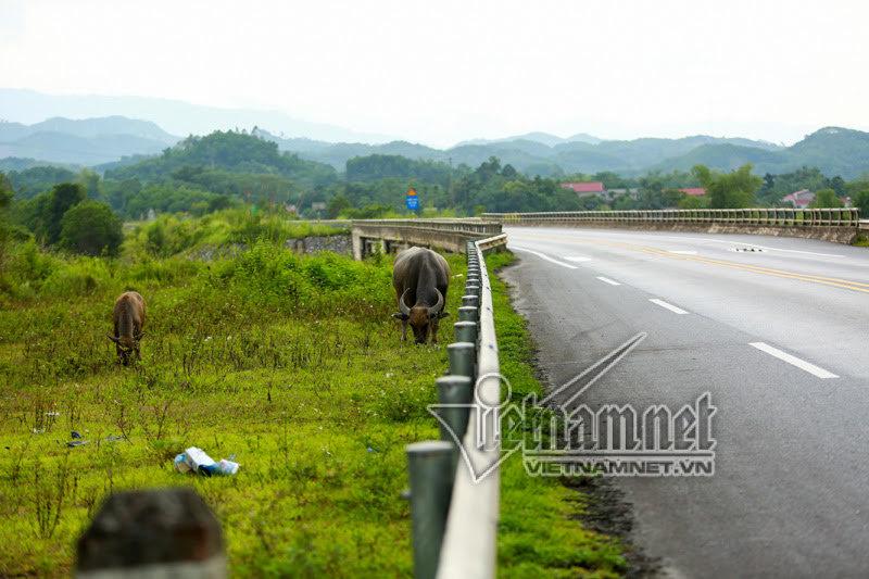 cao tốc Nội Bài - Lào Cai