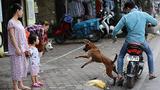 Chó thả rông đi cắn trẻ em, mối nguy hiểm rình rập hằng ngày