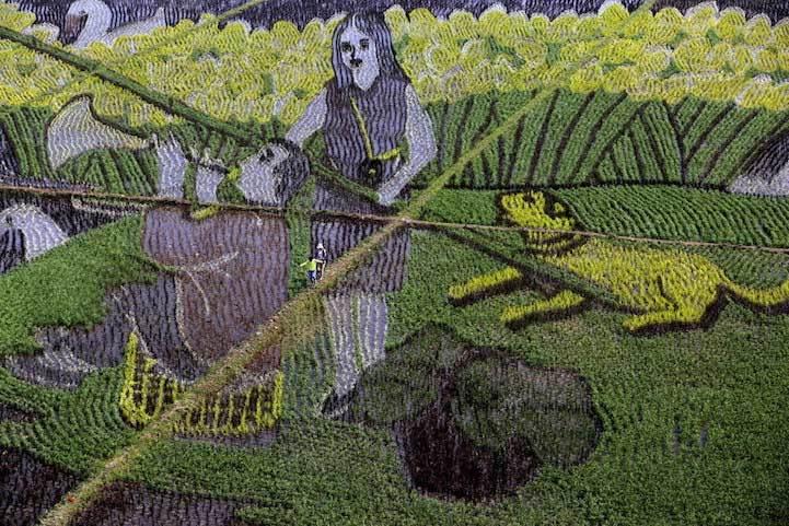 Những bức tranh đẹp mê hồn trên ruộng lúa