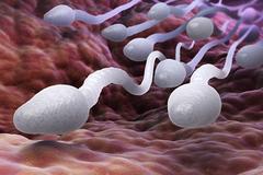 Chế độ ăn thiếu đạm, protetin có thể gây suy yếu tinh trùng nghiêm trọng
