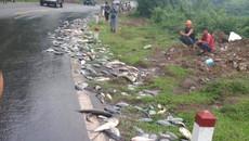 Hòa Bình: Xe tải gặp nạn, cá nhảy tanh tách trắng quốc lộ