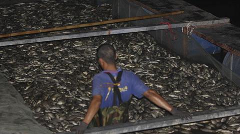 Hồ Tây chết hàng tấn cá, bì bõm xuyên đêm vớt mỏi tay