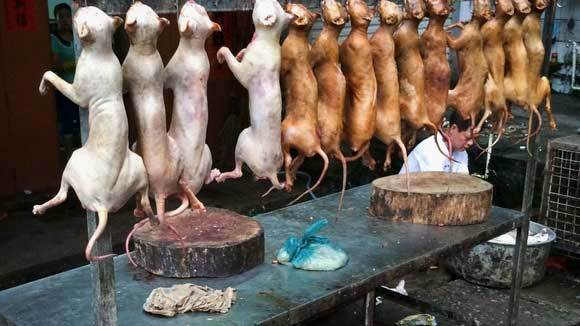 Nơi nào trên thế giới vẫn còn ăn thịt chó, mèo?