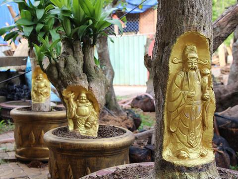 Tượng Phật Di Lặc hiện hình trên cây khế già