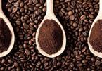 Giá cà phê hôm nay 1/11: Giao dịch dưới 36.000 đồng/kg