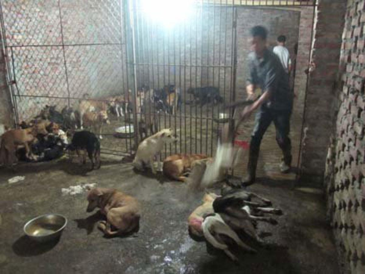 Ăn thịt chó: Những làng nổi tiếng dân nhậu không thể không biết